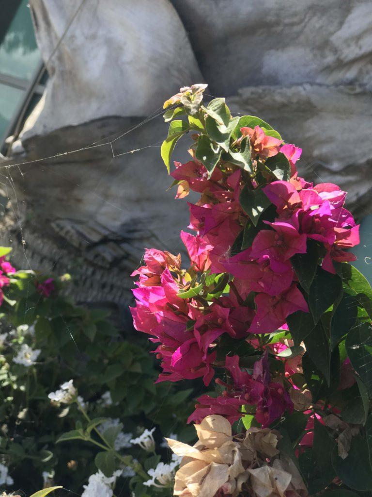 11_floraIsrael